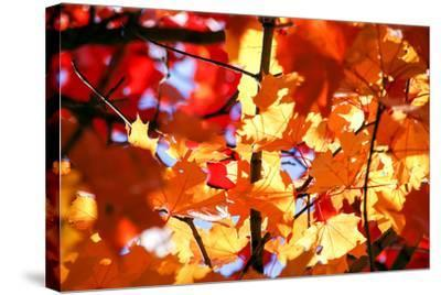 Autumn Leaves Background-Nikolay Etsyukevich-Stretched Canvas Print