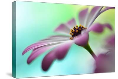 Extending In The Morning Light II-Heidi Westum-Stretched Canvas Print
