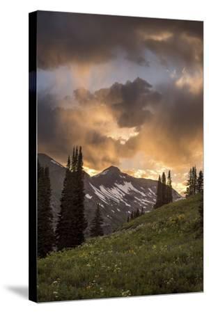 Mountain Evergreens-Dan Ballard-Stretched Canvas Print