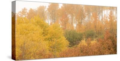 308-Dan Ballard-Stretched Canvas Print