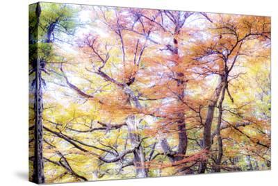 363-Dan Ballard-Stretched Canvas Print