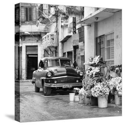 Cuba Fuerte Collection SQ BW - Sunflowers-Philippe Hugonnard-Stretched Canvas Print