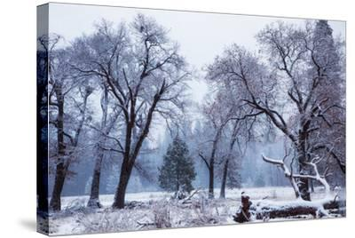 Magical Snow in the Valley El Capitan Meadow Trees & Mist Yosemite Valley-Vincent James-Stretched Canvas Print