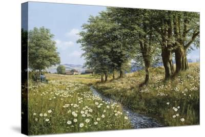 Beeches And Daisies-Bill Makinson-Stretched Canvas Print