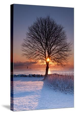 Sun In Tree-Michael Blanchette Photography-Stretched Canvas Print