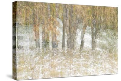 Motion Trees 3-Moises Levy-Stretched Canvas Print