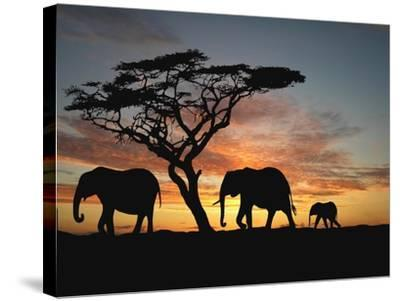 Group of Elephant in Africa-TebNad-Stretched Canvas Print