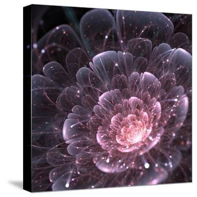 Pink abstract flower with sparkles on black background, fractal illustration-Anikakodydkova-Stretched Canvas Print