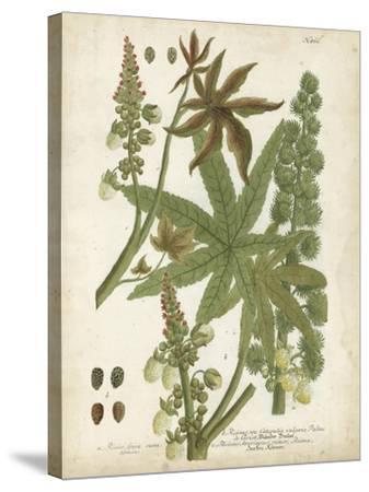 Weinmann Tropical Plants I-Johann Weinmann-Stretched Canvas Print