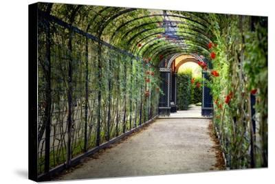 Rose Trellis In Schonbrunn Palace-George Oze-Stretched Canvas Print