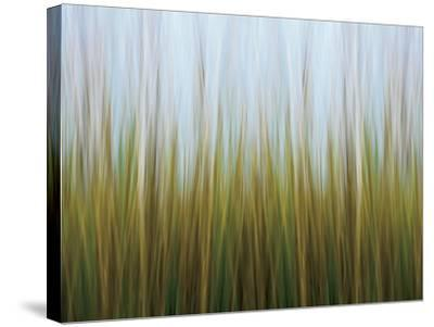 Seagrass Canvas-Katherine Gendreau-Stretched Canvas Print