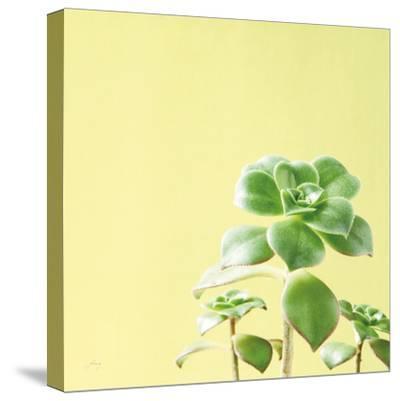 Succulent Simplicity X-Felicity Bradley-Stretched Canvas Print