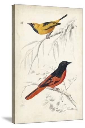 D'Orbigny Birds VIII-M^ Charles D'Orbigny-Stretched Canvas Print
