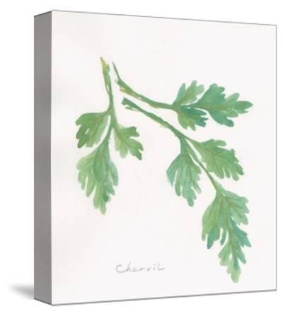 Chervil-Chris Paschke-Stretched Canvas Print