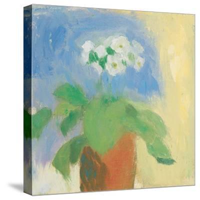 Cream Primula-Michael Clark-Stretched Canvas Print