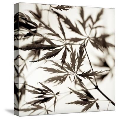 Florison #50-Alan Blaustein-Stretched Canvas Print