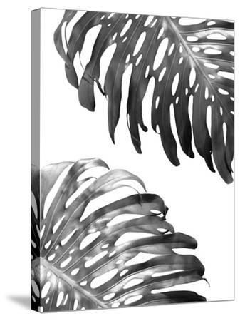 Double Philodendron (BW)-Lexie Greer-Stretched Canvas Print