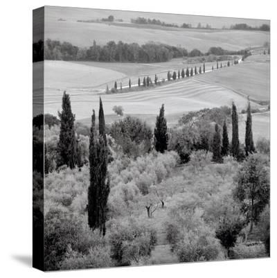 Tuscany #6-Alan Blaustein-Stretched Canvas Print