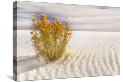 Dunescape #2-Deborah Loeb Bohren-Stretched Canvas Print