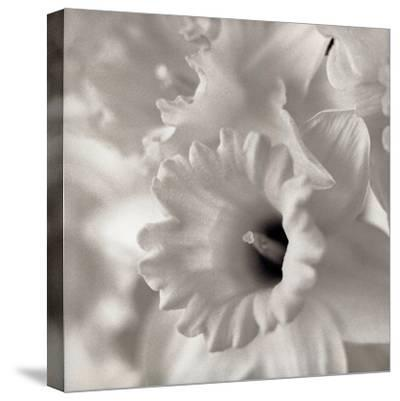 Florison #45-Alan Blaustein-Stretched Canvas Print