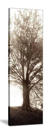 Hampton Gates Tree No.1-Alan Blaustein-Stretched Canvas Print