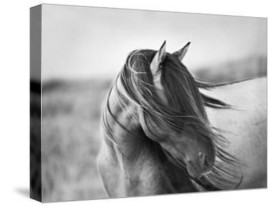 Fierce Grace-Tony Stromberg-Stretched Canvas Print