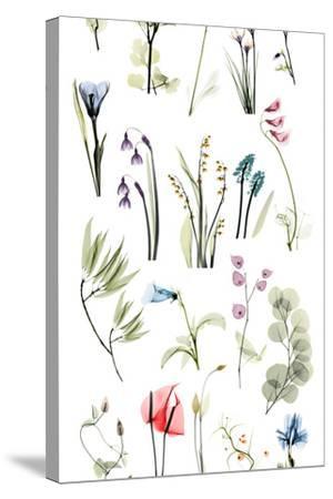 Zen Garden-Albert Koetsier-Stretched Canvas Print