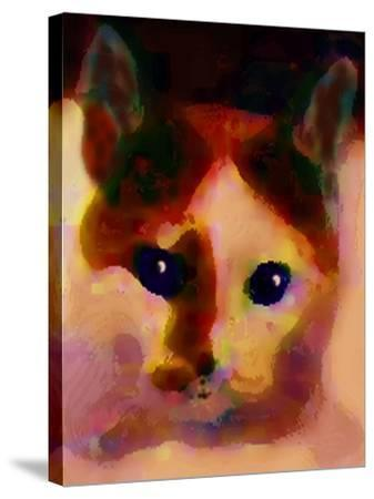 Tinsy Cat-Kenny Primmer-Stretched Canvas Print