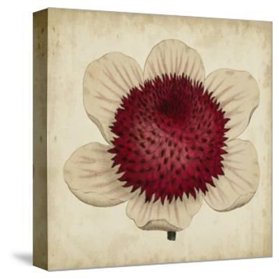 Pop Floral IV-Vision Studio-Stretched Canvas Print
