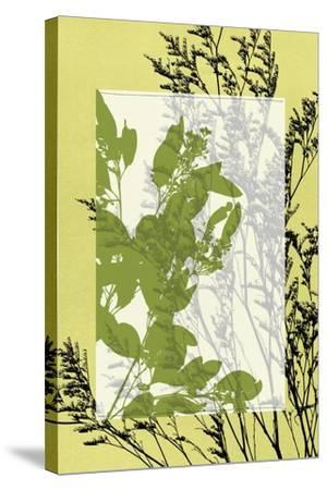 Small Translucent Wildflowers III-Jennifer Goldberger-Stretched Canvas Print