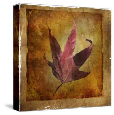 Fallen II-Ryan Hartson-Weddle-Stretched Canvas Print