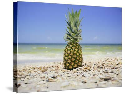 South Florida Pineapple II-Adam Mead-Stretched Canvas Print