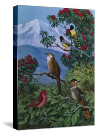 Yellow Billed Blue Magpies, a Rose Finch, Rufous Chinned Laughing Thrushes and Spiny Babbler Perch-Walter A. Weber-Stretched Canvas Print