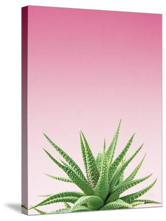 Succulent Simplicity I Pink Ombre Crop-Felicity Bradley-Stretched Canvas Print