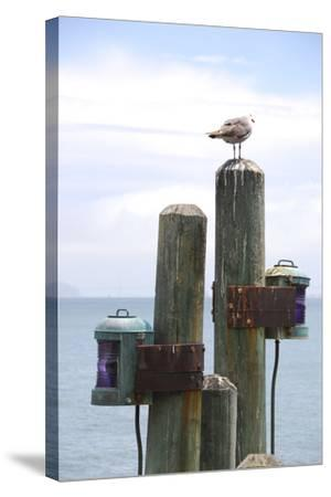 Seagul on Sausalito Pier, Marin County, California-Anna Miller-Stretched Canvas Print