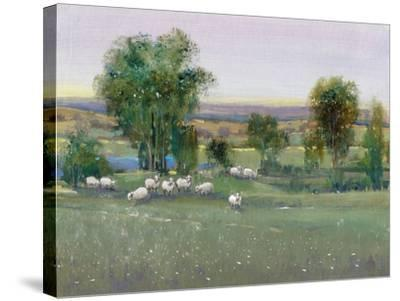Field of Sheep II-Tim O'toole-Stretched Canvas Print