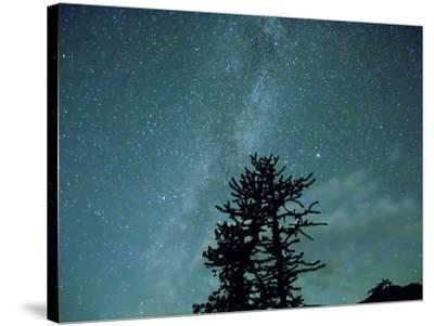 Washington State, Alpine Lakes Wilderness, Ingalls Pass, Milky Way and trees-Jamie & Judy Wild-Stretched Canvas Print