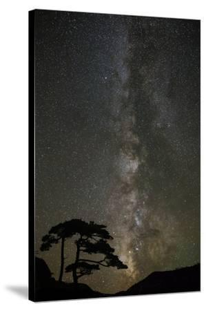 Milky Way and silhouetted tree, Ouray, Colorado-Adam Jones-Stretched Canvas Print