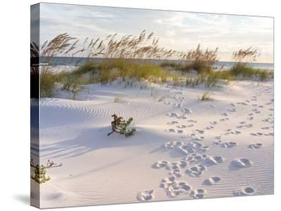 Footprints in the Sand at Sunset in the Dunes of Pensacola Beach, Florida.-forestpath-Stretched Canvas Print