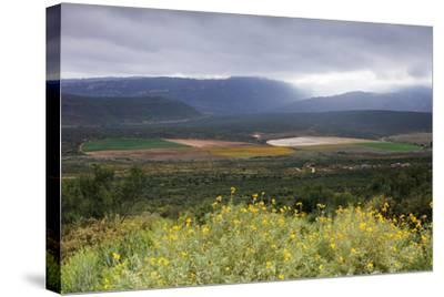 Crop circles, Cederberg Wilderness Area, Western Cape, South Africa, Africa-Christian Kober-Stretched Canvas Print