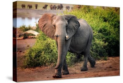 African elephant, Chobe National Park, Botswana, Africa-Karen Deakin-Stretched Canvas Print