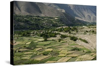 Wheat fields in the Panjshir Valley, Afghanistan, Asia-Alex Treadway-Stretched Canvas Print