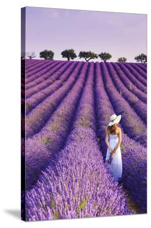 France, Provence Alps Cote d'Azur, Haute Provence, Plateau of Valensole, Lavander Fields-Michele Falzone-Stretched Canvas Print