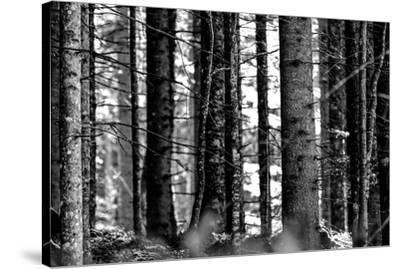 Wood-Jule Leibnitz-Stretched Canvas Print