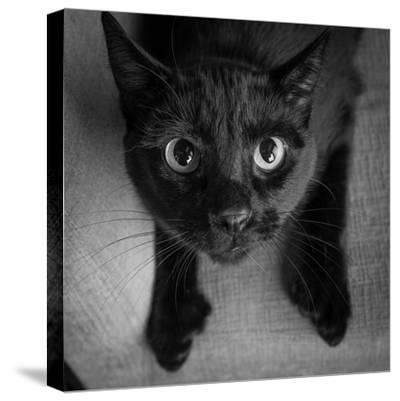 Portrait of a Black Cat on a Chair--Stretched Canvas Print