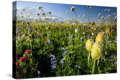 Close-Up of Wildflowers, Mount Rainier National Park, Washington State, USA--Stretched Canvas Print
