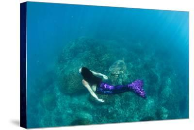 View of Mermaid Swimming in Ocean, Hawaii, USA--Stretched Canvas Print