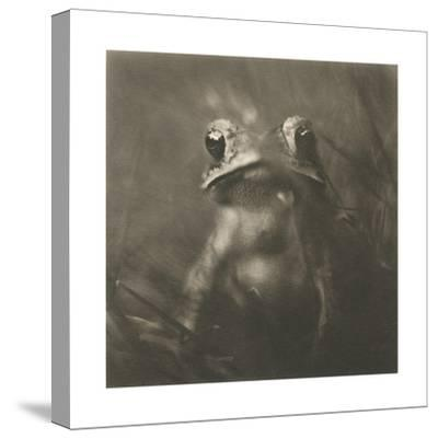 Frog-David Johndrow-Stretched Canvas Print