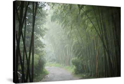 Bamboo Forest, Sichuan Province, China, Asia-Michael Snell-Stretched Canvas Print