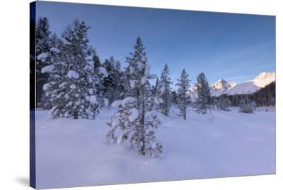 Snow covered trees, Lej da Staz, St. Moritz, Engadine, Canton of Graubunden (Grisons), Switzerland,-Roberto Moiola-Stretched Canvas Print